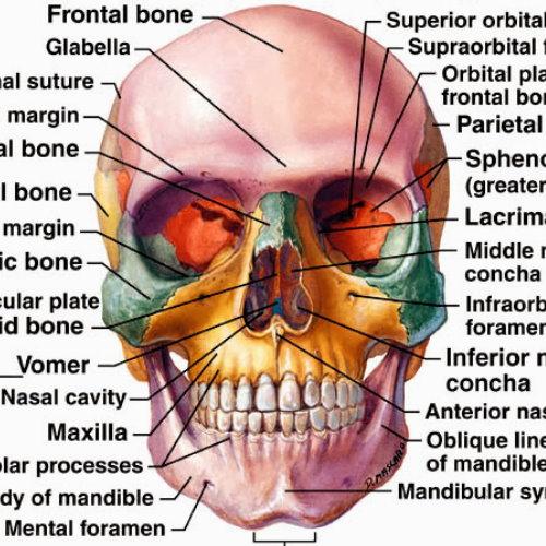 削骨手術效果如何?臉部輪廓概念分析