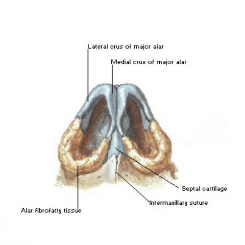 鼻頭塑型手術前後照片比對,鼻頭塑型手術個案分析