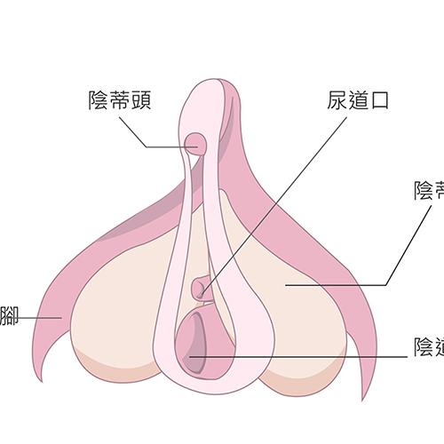 陰蒂包皮整形手術 女婦產科專科醫師執刀